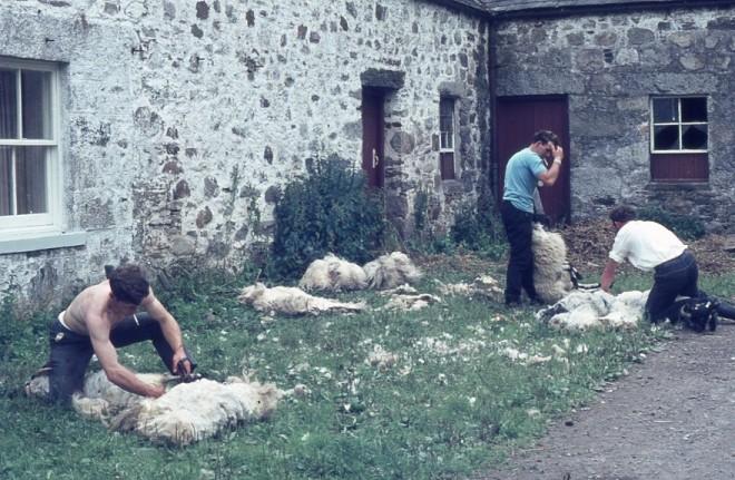 Sheep shearing Kindrogan 1969