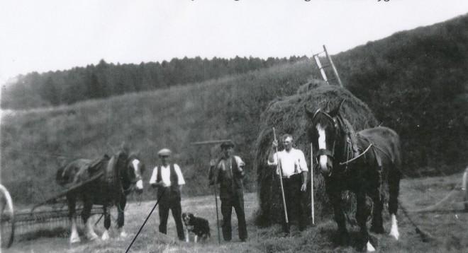 Haymaking Ballintuim  late 1930's