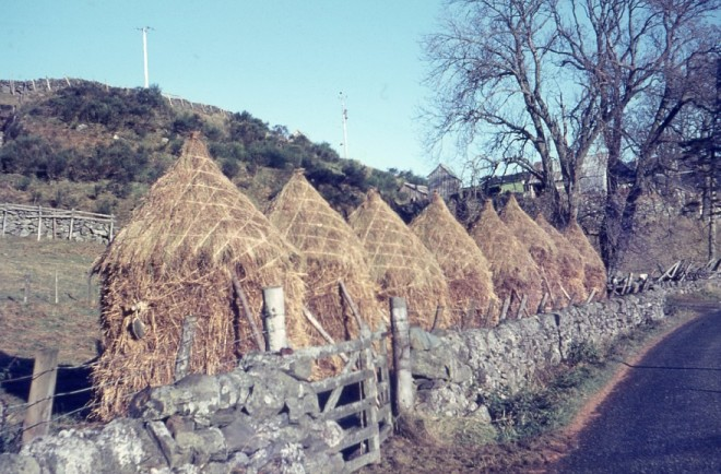 Haystacks at Tarvie 1967