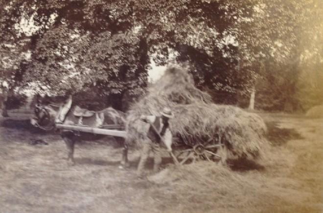 Haymaking Solarizie 1887