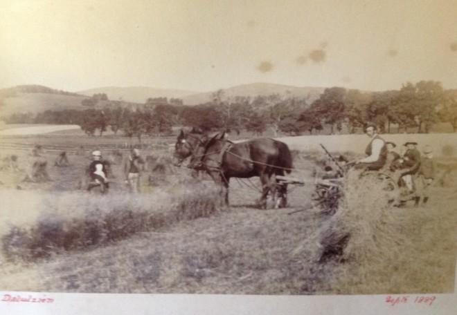 Haymaking at Dalrulzian